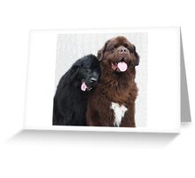 Two Newfoundland dogs in love Greeting Card