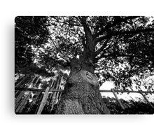 Bigger Tree Canvas Print