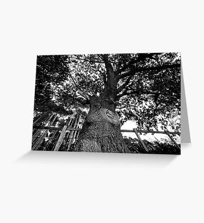 Bigger Tree Greeting Card