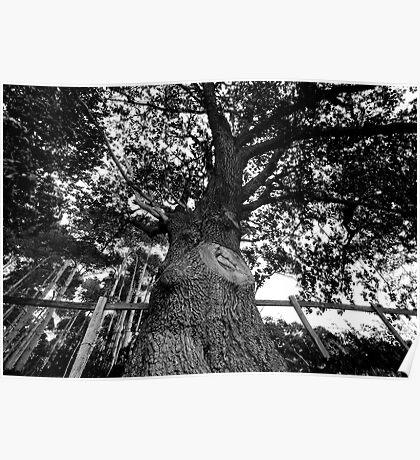 Bigger Tree Poster