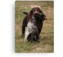 Boykin pup with duck Canvas Print