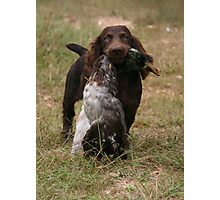 Boykin pup with duck Photographic Print