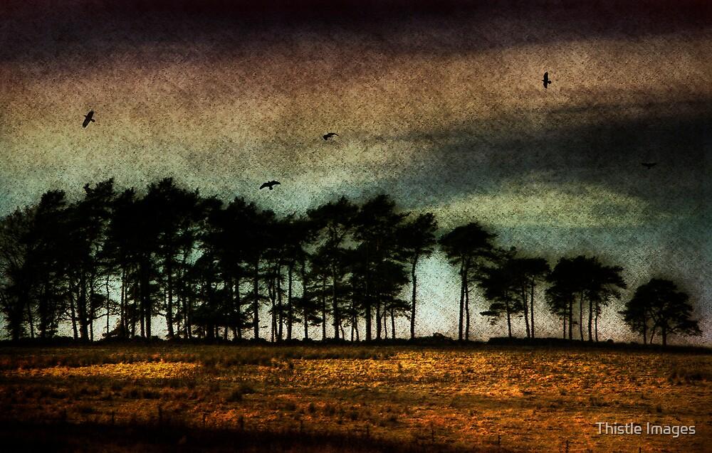 Under a Mugdock Sky by Linda  Morrison