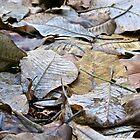 Carpet of Leaves by John Thurgood