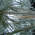 Palm Tree Leaves by DavePlatt