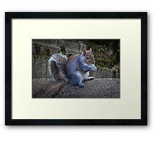 Eastern squirrel Framed Print