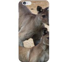 Kangaroo Two, Australia iPhone Case/Skin