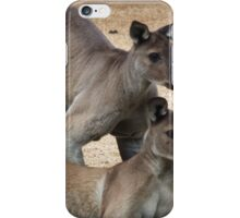 Kangaroo Two, Australia iPhone Case/Skin
