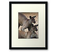 Kangaroo Two, Australia Framed Print