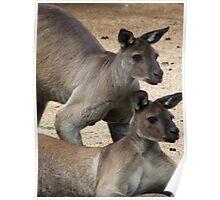 Kangaroo Two, Australia Poster