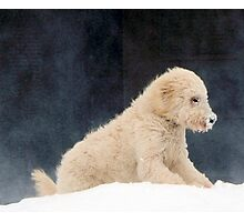 Cold Nose Photographic Print