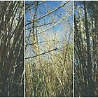 Bamboo Collage by tropicalsamuelv