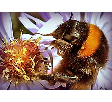 Somethings Bee-n Here Bee-fore Me! Photographic Print