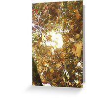 Autumn Sun Rays #14 Greeting Card
