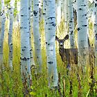 Deer with Aspens by BrianAShaw