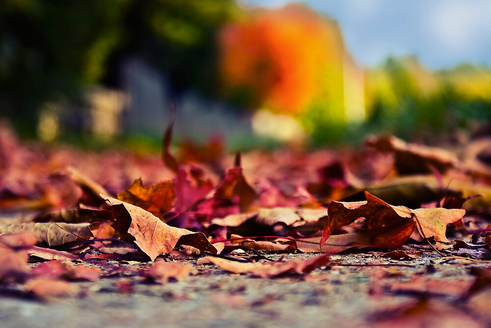 Leaves by Michael Gold