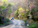 On The Road To Spring by NatureGreeting Cards ©ccwri