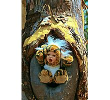 Hole in the Trunk TIger Doll  Photographic Print