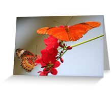 Two Butterflies on a Geranium Stalk Greeting Card