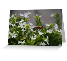 Bee Gathering Pollen no.1 Greeting Card