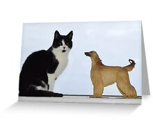 Are Afghans getting smaller, or cats getting bigger? Greeting Card