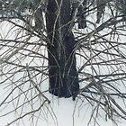 "Untitled - ""Squaw Wood"" by Jim Legge"