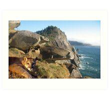 1070-California Coast Cougar Art Print