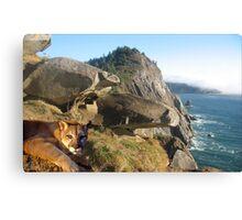 1070-California Coast Cougar Canvas Print
