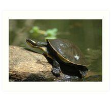 Tortoise. Art Print