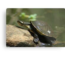 Tortoise. Metal Print