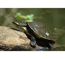 Tortoise. Photographic Print