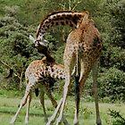 Giraffe and baby, Navaisha, Kenya by Mel1973