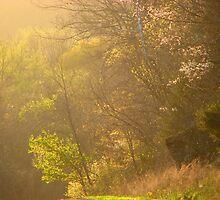 ~Golden Light Play~03 by NatureGreeting Cards ©ccwri