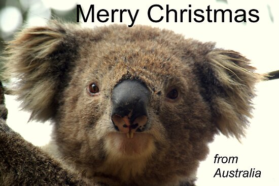 Buckies Christmas message by Kristina K