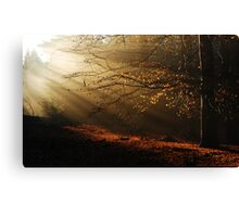 When the morning sun kisses the last leaves of autumn Canvas Print