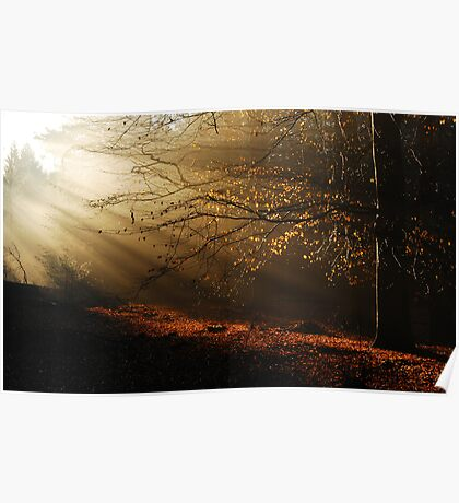 When the morning sun kisses the last leaves of autumn Poster