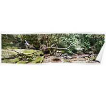 Somersby Falls Panorama Poster