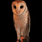 Owl by KeepsakesPhotography Michael Rowley