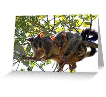 Possums Greeting Card