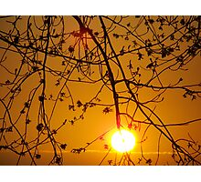 Grows On Trees Photographic Print