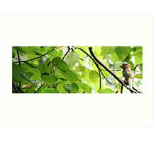 Arborealism Art Print