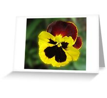 Little Treasure - Sunlit Amber and Gold Pansy Greeting Card