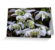 Woodland snowdrops Greeting Card