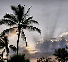 Hawaiian Sunbeams by Teresa Zieba