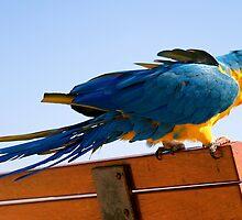 Macaw Extended by Henrik Lehnerer