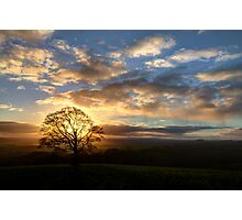 Lone hill top tree at sunset Photographic Print