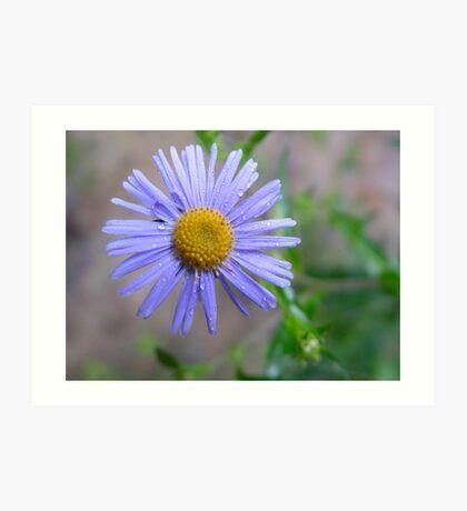 Wild Purple Flower  Art Print