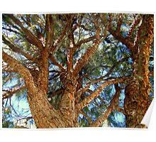 Pinetree Poster