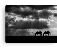 Evening Rays Canvas Print