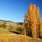 Corryong by Darren Stones